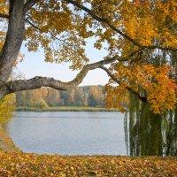 В парке :: Valery Remezau