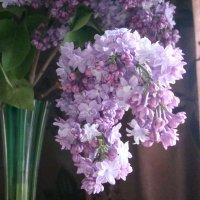 С добрым утром ! :: марина ковшова