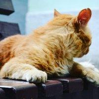 Кошка со своей  историей :: Натали