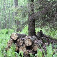 бревна в лесу :: Светлана Рябова