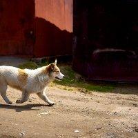 Собака - пролетака :: Владислав Левашов