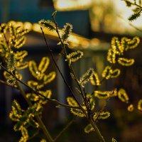 весенний свет :: леонид логинов