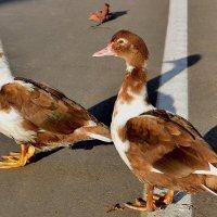 Пешеходов надо пропустить :: NSS