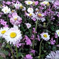 весеннее цветочное настроение :: maxim