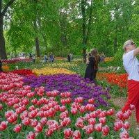 Фестиваль весенних цветов :: Ольга