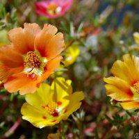 Осенние цветы :: Наталья Каракуца