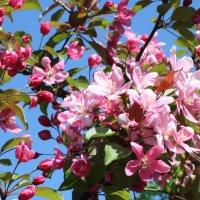 Весна в парке :: Valery Remezau