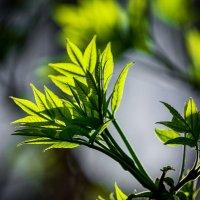 Молодо-зелено :: Татьяна Губина