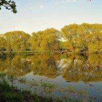 Окунулась Весна в пруд... :: Sergey Gordoff