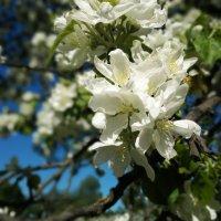 Весна, весна на улице, Весенние деньки! :: Рома Григорьев