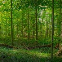 В лесу летом :: Valery Remezau
