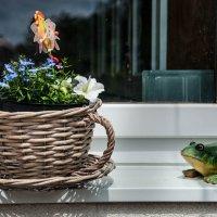 Про жабу :: Андрей ТOMА©