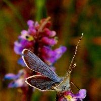 про бабочек 5 - в лиловом тоне :: Александр Прокудин