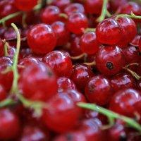 Смородиновые витамины :: Светлана Былинович