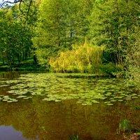 Городской озеро :: Сергей Карачин