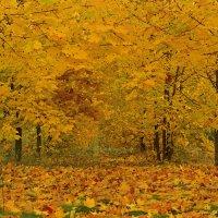 Осень :: Владимир Кириченко  wlad113