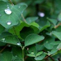 Дождь :: Надежд@ Шавенкова