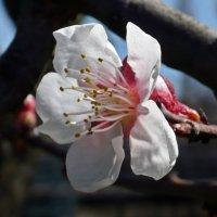 Весенний цвет :: Татьяна Ларионова