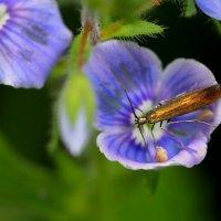 букашка в маленьком цветочке :: Александр Прокудин