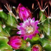 Волшебные колючки с очаровательными цветами :: Валентина Пирогова