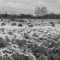 Пейзаж у дороги :: Валерий Михмель