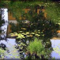 живописная речка. :: Любовь