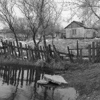 Домик в деревне :: Валерий Михмель