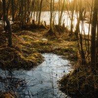 Осеннее болото :: Petr