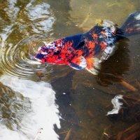 "DSC_0177   Фото Рыбалка: ""Золотая рыбка"" :: Aleks Minin"