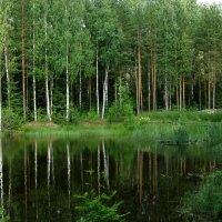 Лесное озеро :: Надежда