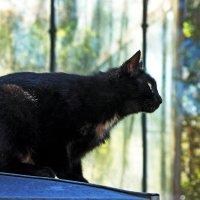 Очарованный кот ботанический :: Ирина Румянцева