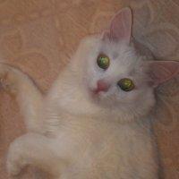 Кошка Соня.фото-2. :: Nata
