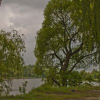 Пока не начался дождь ... :: Ольга Винницкая (Olenka)