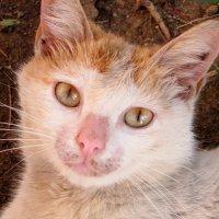 Кошечка из Гагры :: Мазутка