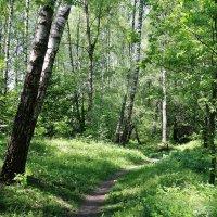 Весенний лес :: Владимир Холодницкий