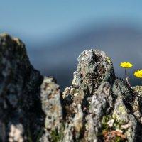 Камни и цветы. :: Ник Васильев