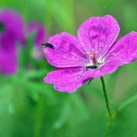 Весны цветы. Май... :: Александр Резуненко