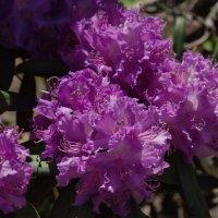 Цветы :: Фиклеев Александр