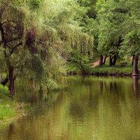 Тихая вода. :: barsuk lesnoi