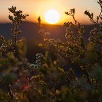 Солнышко и цветы :: Ирина