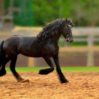 Резвая лошадка :: НАТАЛИ natali-t8
