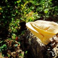 В лесу... :: Константин Иноземцев