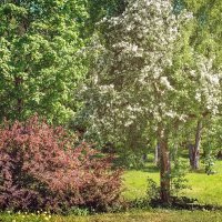 Ботанический сад. :: Юлия Новикова