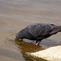 Птица не человек и выпить должен :: donat