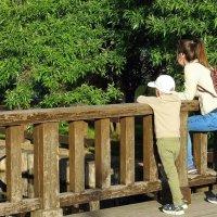 На мостике :: Ирина Via
