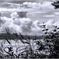 Острые листья тростника устремились в облака :: Ирина Беркут