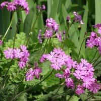 Майские цветочки :: Валюша Черкасова