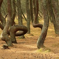 Танцующий лес :: Lusi Almaz