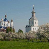 Монастырский сад :: Владимир Безгрешнов