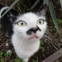 Кошечка из Абхазии :: Мазутка